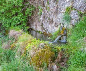pilon de agua y punto de reproducción de anfibios